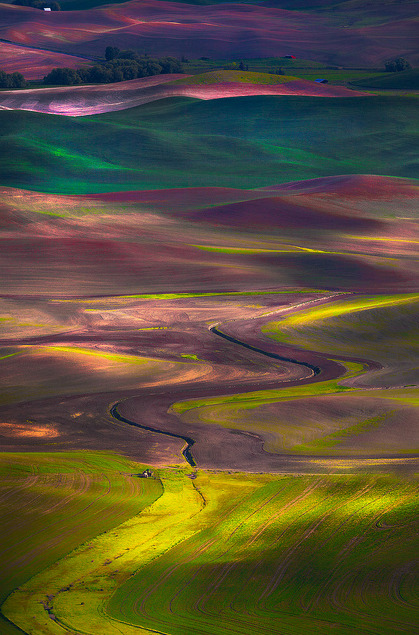 brujas:  The Palouse_Tapestry Of Colors