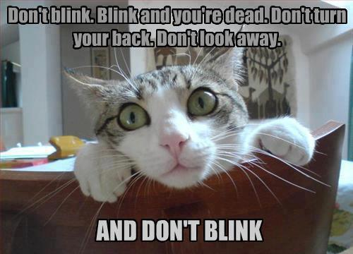 cheshireshecat:  Don't blink. Blink and you're dead.