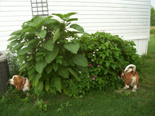 theclearlydope:  Basset portals are my favorite portals.  bunnyfood:  (via bankston)