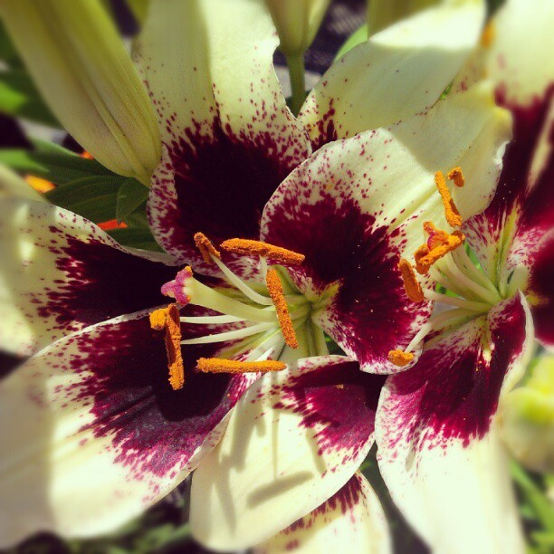 Pretty flower :) (Taken with Instagram)