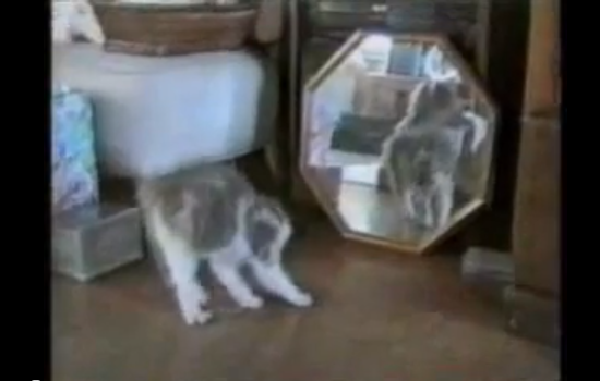 oooh i think 'cats being terrified of their own reflection' might be my new 'guilty dogs being scolded'!!!!!!!
