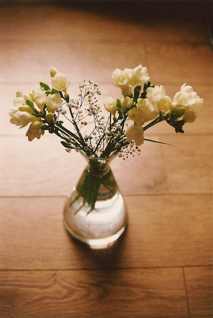 floristas:  down-that-rabbit-hole:  untitled by Bazzerio on Flickr.