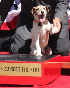 "Uggie, the canine star of The Artist, is the first pup ever to immortalize his paw prints outside of the Grauman's Chinese Theater in Hollywood. GOOD DAY FOR: Spicing up your lifeThe Spice Girls officially announce the London premiere of Viva Forever!, a musical based on the girl group's greatest hits. [BuzzFeed] Canine celebsUggie, the Jack Russell terrier best known for his role in the Oscar-winning film The Artist, plants his paw prints on Hollywood's walk of fame. [The Frisky] Protecting ""The Brow""Kentucky basketball phenomenon Anthony Davis, who is widely expected to be the top pick in Thursday's NBA draft, trademarks his famous unibrow by calling dibs on the phrases ""Fear The Brow"" and ""Raise The Brow."" [The Daily What] BAD DAY FOR: Celebrity dopplegangersA Tennessee man is kicked out of a Kenny Chesney concert for causing ""confusion"" after other fans mistake him for the country singer. [Death & Taxes] Excessive subdivisionsAn L.A. landlord is in trouble with the law for allegedly dividing a three-apartment triplex into 44 separate units. [Consumerist] Rookie mistakesA New Jersey woman sues a little-leaguer for $150,000 after his errant throw hits her in the face during practice. [TIME]"