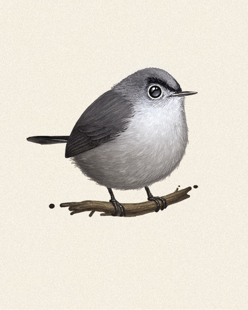 Fat Bird #5: Blue-grey Gnatcatcher.  Suggested by Mark Hoppus, and yes, the bird has Eugene Levy eyebrows.