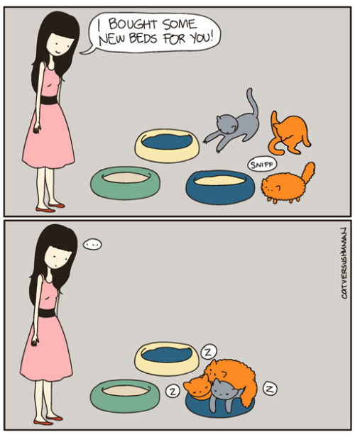 catsbeaversandducks:  Comic by ©catversushuman:  Like this :) Both cats are a lot bigger now though. ——— Here's the drawing I made of the giveaway winner from a few days ago.