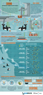 highonsharks:  (via Acoustics » Oceans Initiative - Science for the Sea)