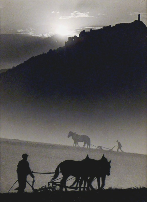 thevintaquarian:  Ploughing, 1935 by Jenő Dulovits   The guy was more than just a good photographer.