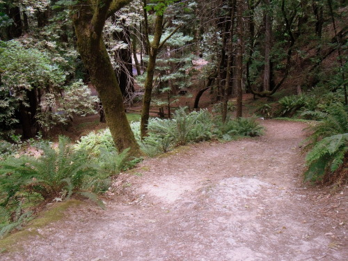 Trail in Armstrong Redwoods - Guerneville, California