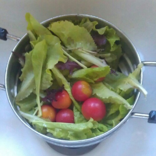From OUR garden ,) (Taken with Instagram)