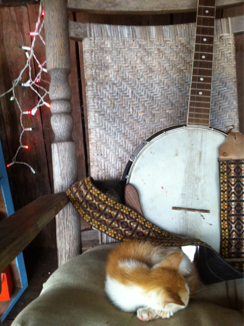 Bluegrass banjo and ginger kitty