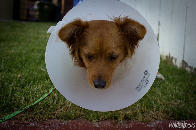 cone head on Flickr.