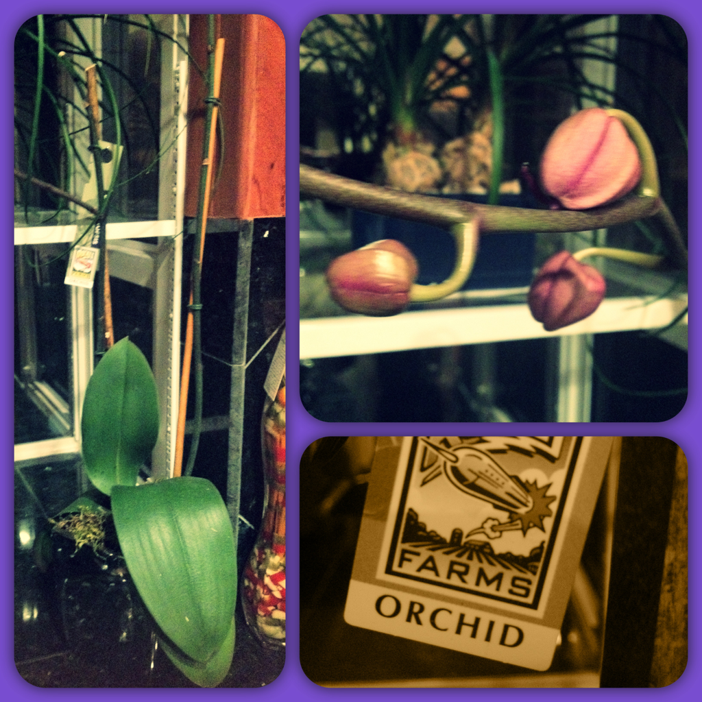 My ORCHIDS ARE BLOOOMING ((: Yayy!!!!!!!!!!! They've been looking hella dead for days. #goodnews And of COURSE I've been taking care of them haha -.- This plants gonna represent my new life. I ain't scared of my past. As a matter of fact, I'm gonna face it head on. High off life. For #newbeginnings #renewal #newlife #projectbetteringme Much needed 2 day break (: Go get ready and TIME TO DRINK IT UPPPPPPPPPP