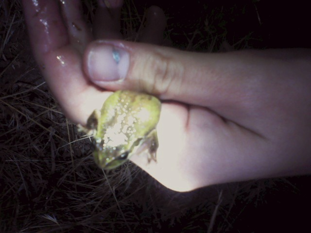 So Jay and I went frog hunting and I found this baby frog and it's so adorable I seriously wanted to keep it for forever but I had no where to put it so we let it go. So much fun!