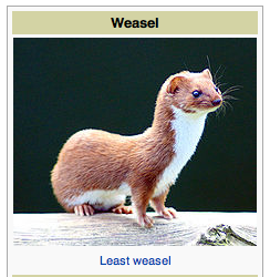 snakelet:  nah that looks Sufficiently Weasel to me. maybe not Most Weasel but that's definitely Pretty Dang Weasel