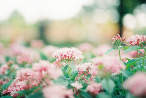 abbracci:  flower (by mieeeco)