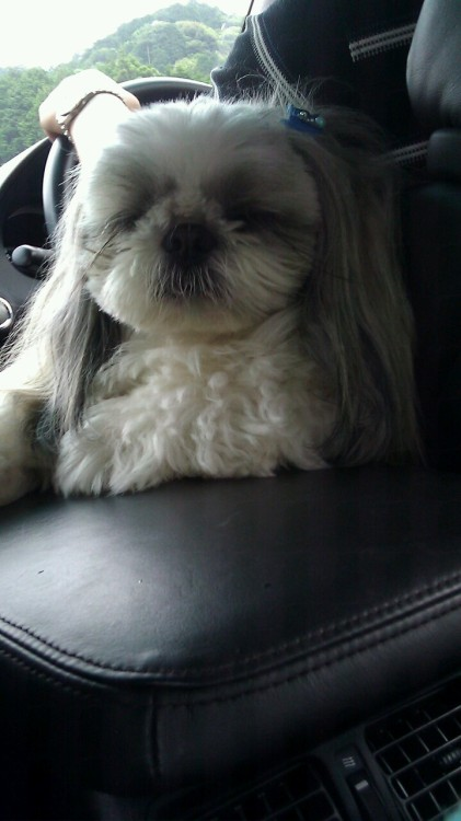 Hey look guys my aunt's dog has a hitler mustache :o