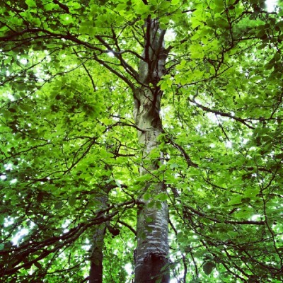 Never Ending #tree (Taken with Instagram)
