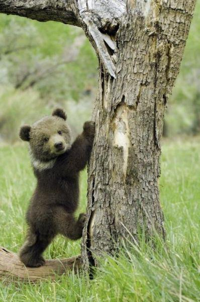 funnywildlife:  I am off to the tree top!!