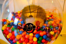 Craving a gumball? They're up for grabs at anytime! We just won't mention what's hiding amongst the mix …