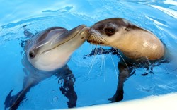 theanimalblog:  Best of friends, Jet the dolphin and Miri the seal at Pet Porpoise Pool, Coffs Harbour, Australia Picture: Nathan Edwards/Newspix / Rex Features
