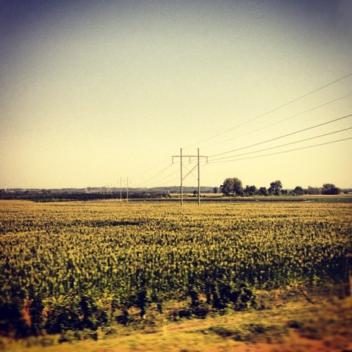 Lines of Communication.  (Taken with Instagram at @Amtrak from LA to NYC)