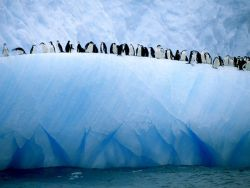 funkysafari:  A group of chinstrap penguins lines the edge of an iceberg adrift in Antarctic waters. Chinstraps are among the most abundant penguins, and some colonies live on floating icebergs. Photograph by Ralph Lee Hopkins