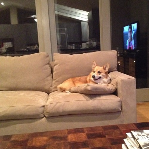 andcorgimakesthree:  King Hambone! #corgi #cute #love #petstagram #corgistagram #dog #photooftheday #iger (Taken with Instagram)  All hail King Hambone!