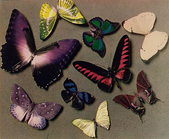 Butterflies by Man Ray