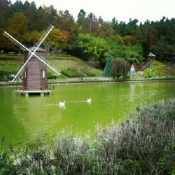 #Taiwan #taichung #cingjing #water #garden #windmill #swan #pond #flowers  (Taken with Instagram)