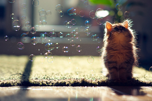 "earth-song:  ""Kitten Observes Transit of Bubbles"" by Ben Torode"