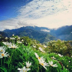 #Taiwan #taichung #cingjing #nature #mountain #sky #grass #cloud #flowers  (Taken with Instagram)