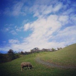 #Taiwan #taichung #cingjing #sheep #animal #farm #sky #cloud #grass  (Taken with Instagram)