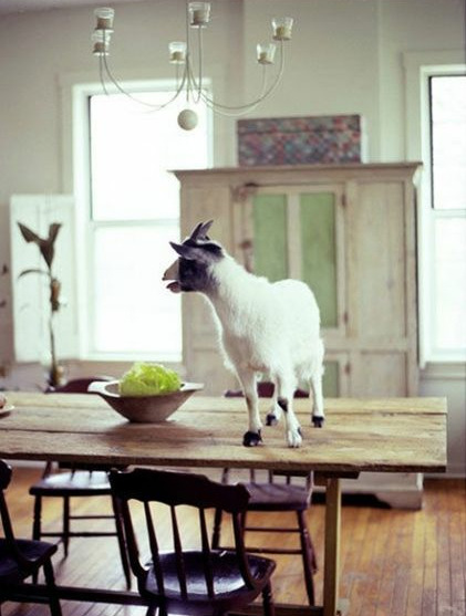touchoftea:  (photo via Houzz)  @natashakills… ALL the baby goats…
