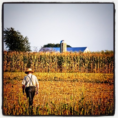 "beingblog:  ""Good farmers who take seriously their duties as stewards of Creation and of their land's inheritors, contribute to the welfare of society in more ways than society usually acknowledges, or even knows."" —Wendell Berry from Bringing It to the Table: On Farming and Food. Photo by Bob Jagendorf. (Taken with Instagram)  Good stuff Wendell. I have to read more from this guy though there never seems to be enough time in the day!"