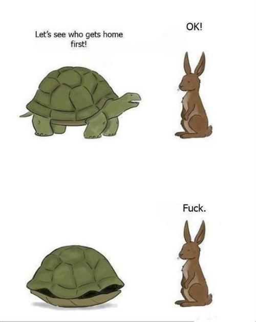 i like turtles.