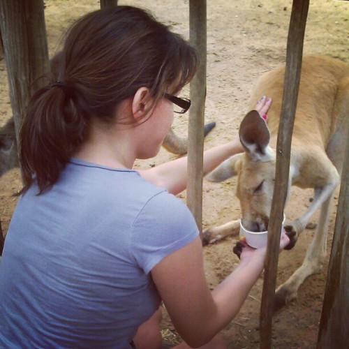 #feeding a #kangaroo #cute #animal  (Taken with Instagram)