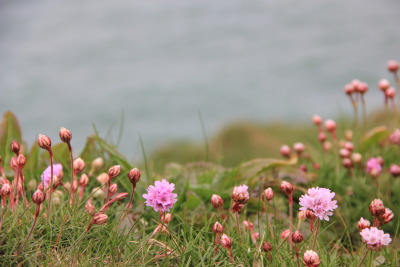 Flowers on the Coast