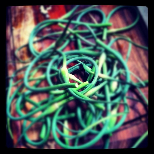 Garlic Scapes (Taken with Instagram)
