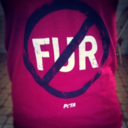 #PETA #nofur #saveanimals #pain #mistreated #cruel #notright #support #right #humane #help #buyfaux  (Taken with Instagram)