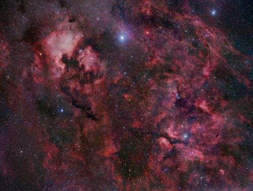 Starfield of the northern end of Cygnus, by Robert Gendler. The bright star is Deneb, a class A white supergiant.
