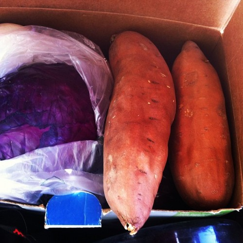 Re-stocking the produce in my low tech fridge (read: cardboard box). Now back into the City of Rocks for more #climbing. When #diet counts keep it fresh—and life on the road is no excuse! #project365 #type1diabetes  (Taken with Instagram)