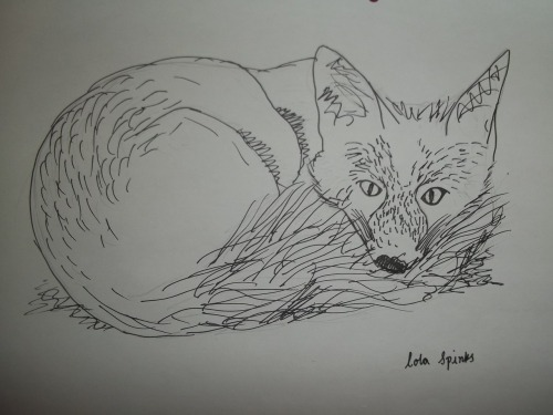 Sleepy fox  Lola Spinks  Thinking of using this as my next T-shirt design… What do you think?