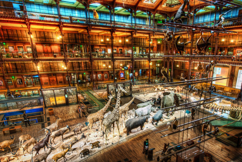 A Night at the Museum by Stuck in Customs on Flickr.