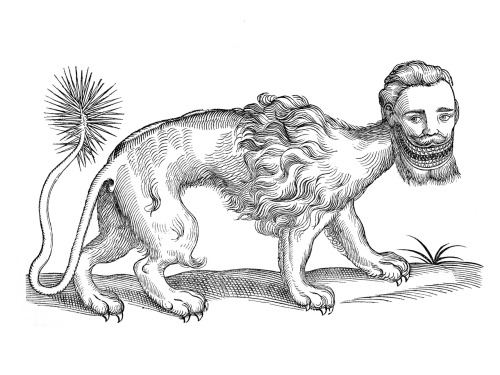 A 1607 woodcut of a manticore, scanned from Curious Woodcuts of Fanciful and Real Beasts.  The artist is unknown.  Mediæval zoological treatises, like Tumblr, rarely credit the artists.
