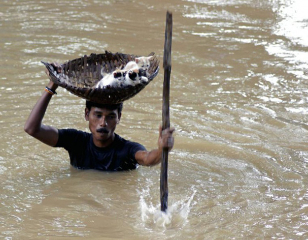 Villager carrying stranded kittens to dry land during floods in Cuttack City, India.