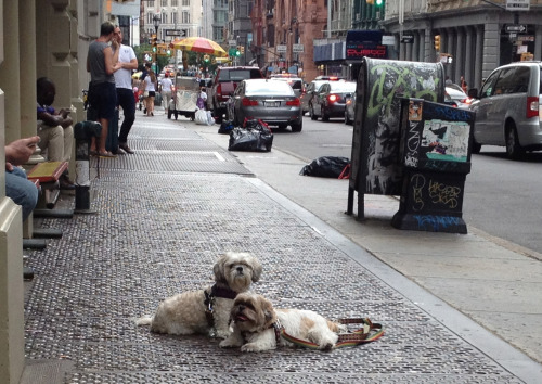 PHOTO OP: Puppies in SOHO Submitted by Nina Cohen.