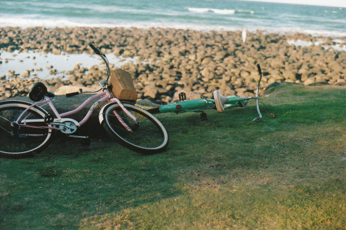 palides:  (by Alannah Grace)