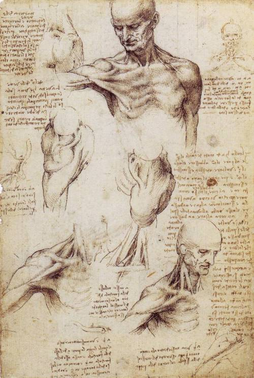 Leonardo Da Vinci, Studies of the Shoulder and Neck, c. 1509-1510