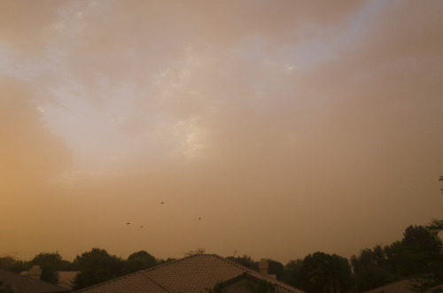 glerbrot:  got dat haboob up in az tonight  we haboobin it up sonnnn
