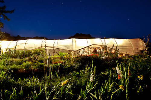 Can you imagine sitting in a greenhouse under the stars eating just-harvested tomatoes and potatoes and carrots and radishes with friends? Doesn't that sound like a perfect evening, especially for the Fourth of July? photo by gabriela herman